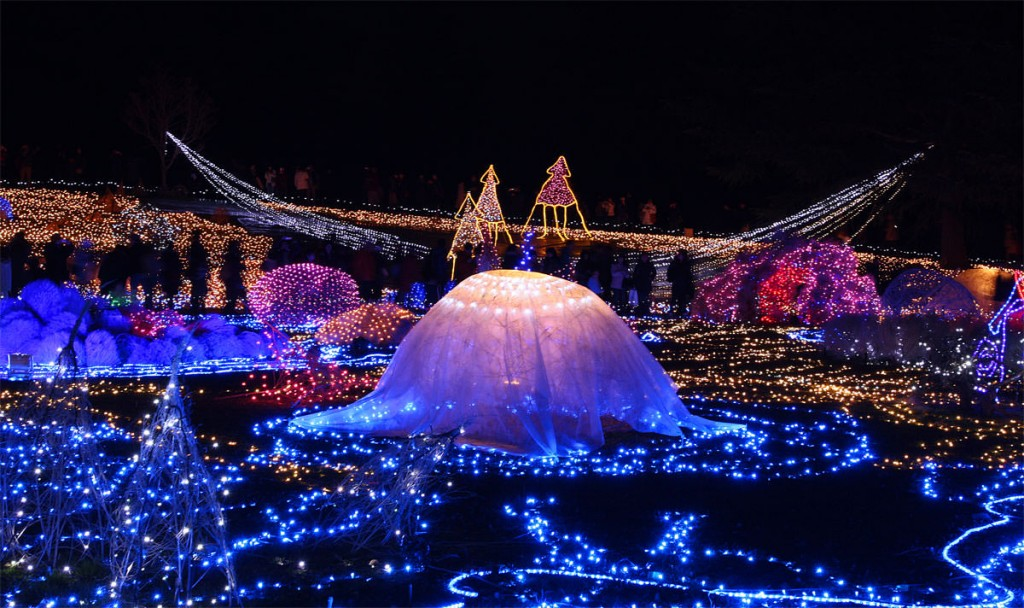 デートスポット6_国営昭和記念公園