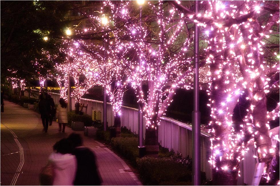 デートスポット8_目黒川
