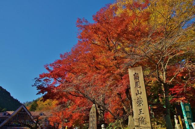 紅葉スポット15_高尾山