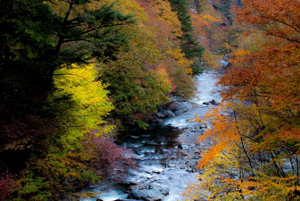 紅葉スポット2_氷川渓谷