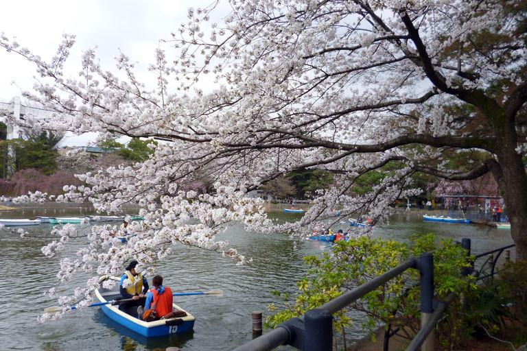 お花見 千葉公園
