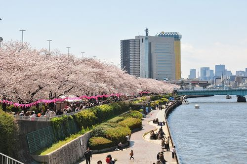 お花見 墨田公園