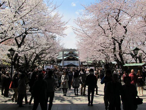 お花見 靖国神社